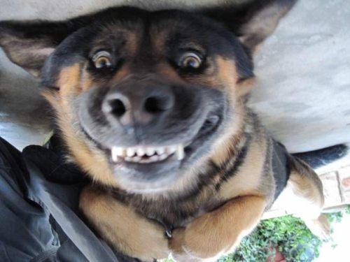 [Image: upside-down-dog.jpg?w=580]