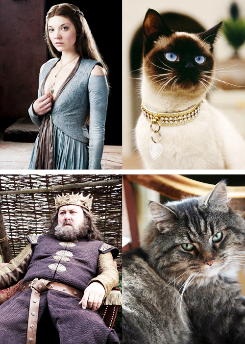 game of thrones cats2