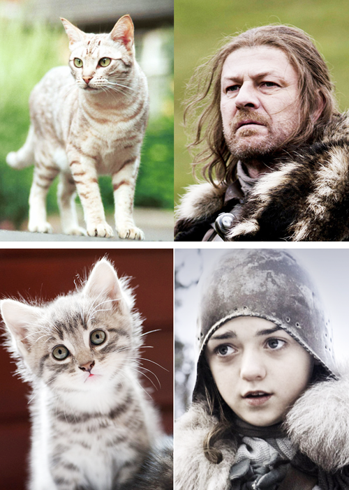 game of thrones cats5