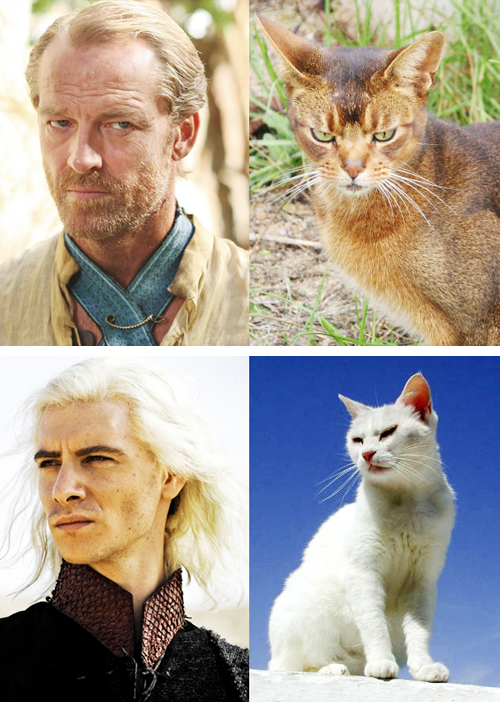 game of thrones cats8